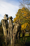 Home made bird houses sit on top of a tree stump at the Oregon City historic home of Dan and Sheryl Hall