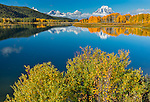 Grand Teton National Park, WY:  Willows on the shore of the Snake River at Oxbow Bend with Mount Moran wrapped in low clouds reflecting with fall colored aspens