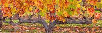 November Vines