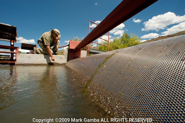 Jude Trapani inspecting a fish screen on an irrigation ditch on the East Fork of the Salmon River