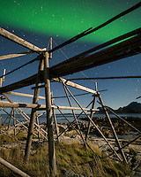 Northern Lights shine in sky over empty cod stockfish drying racks, near Storsandnes, Flakstadoy, Lofoten Islands, Norway