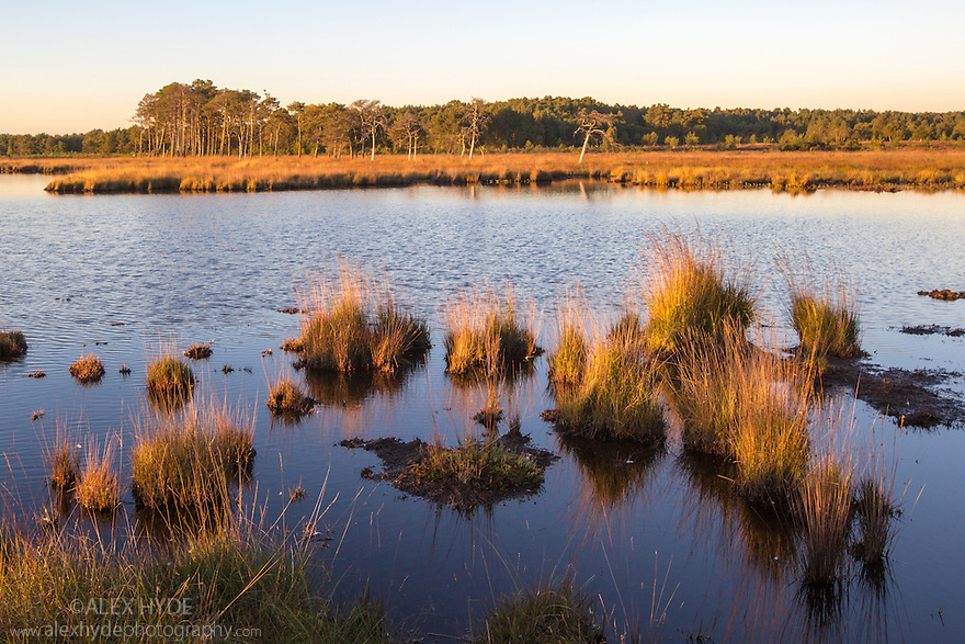 Thursley Common National Nature Reserve, Surrey, UK. October.