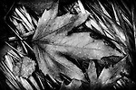 The essence of autumn, in black and white.