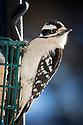 January 22, 2014 / Bird Photography out my office window / Photo by Bob Laramie
