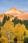 Morning light on Stevens Peak, above autumn quaking aspen (Populus tremuloides), fall, Toiyabe National Forest, California