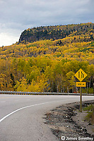 Highway in fall through the Northern Ontario forests.