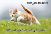 REALISTIC ANIMALS, REALISTISCHE TIERE, ANIMALES REALISTICOS, cats, paintings+++++,USLGSC162044521,#A#, EVERYDAY ,photos,fotos,pounce,cat,cats,kitten,kittens,Seth