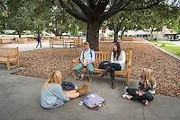 Students sit and talk under the oak trees in the Academic Quad, Nov. 16, 2012. (Photo by Marc Campos, Occidental College Photographer)