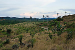 Deforested land regenerating before new planting, Sabah, Borneo, Malaysia