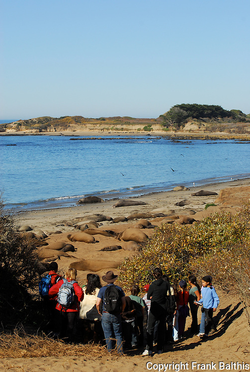 Guided walk and elephant seals at Ano Neuvo State Park