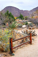 Living Desert Fence and Mountain