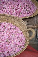 Afrique/Afrique du Nord/Maroc/Fèz: La médina - Pétales de fleurs sur un étal du souk