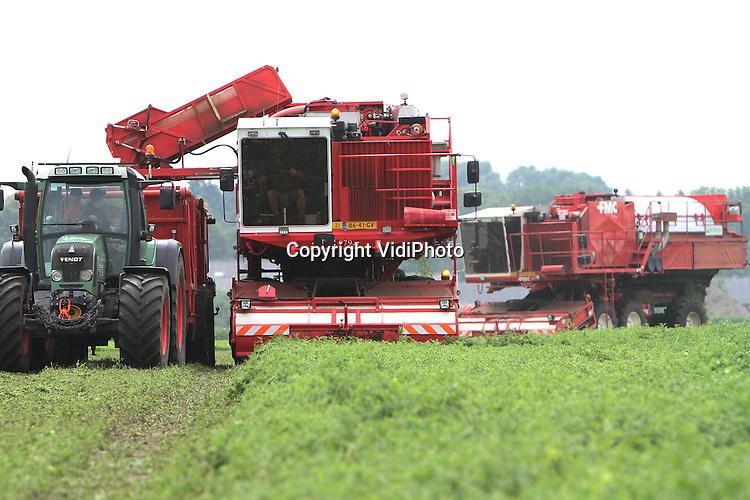 Foto: VidiPhoto..OOSTERHOUT - Twee dorsmachines van conservencommissionair Rijko BV oogsten woensdag de erwten van groententeler Ermers-Vervoort in het Brantse Mill. Door het natte voorjaar begint de oogst een maand later dan normaal.  Erwten zijn de meest populaire groenten van ons land. Om aan de grote vraag te kunnen voldoen wordt er de komende weken 24 uur per dag geoogst. In Nederland wordt jaarlijks zo'n 1500 ha. erwten geoogst, bestemd voor de conserven- (supermarkten) en diepvriesindustrie (horeca) in binnen- en buitenland. De meeste erwtentelers bevinden zich onder de grote rivieren..