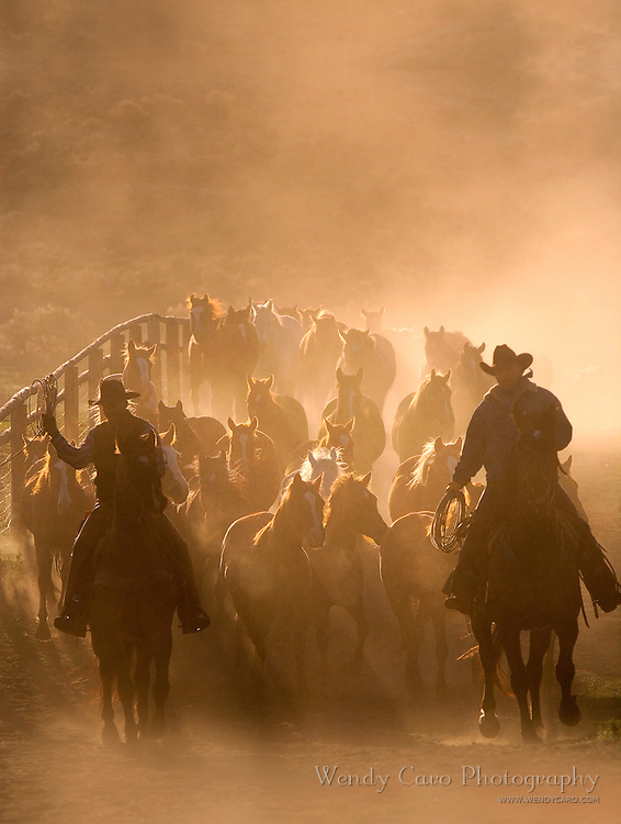 Wranglers leading herd of horses back to the barn, early morning, in the dust