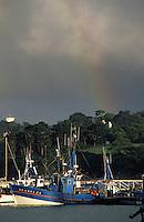 Europe/France/Bretagne/29/Finistère/Douarnenez: Le port de pêche