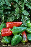 HS41-018x  Pepper - sweet pepper, Lipstick variety