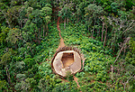 The Yanomamo Indians of the northwestern Amazon live in circular houses called shabonos with an open center and a sheltered margin where they sleep.