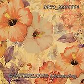 Alfredo, FLOWERS, BLUMEN, FLORES, paintings+++++,BRTOXX06664,#f# ,retro ,everyday