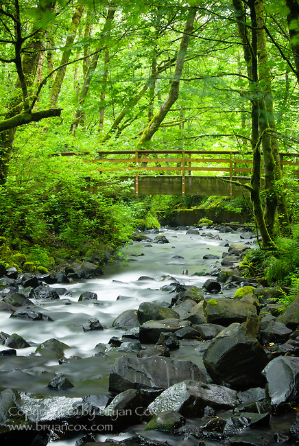 Footbridge, Columbia River Gorge, Oregon