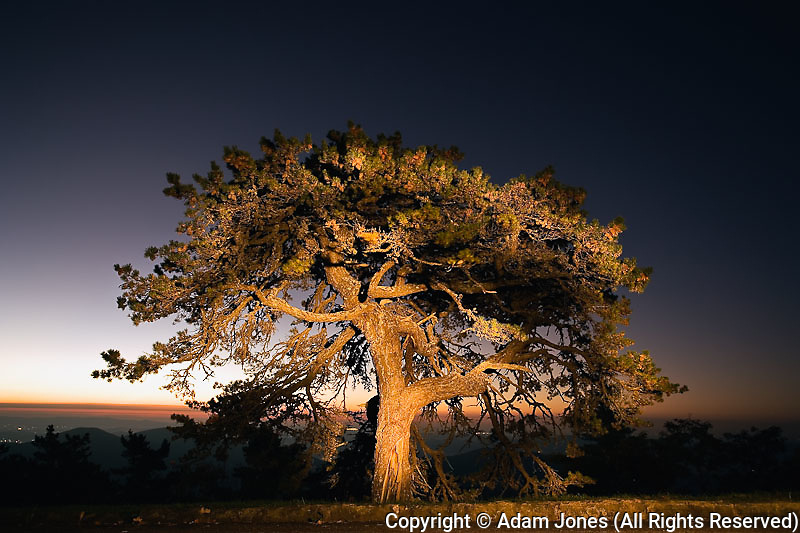 Single tree illuminated with a flashlight at dawn, Blue Ridge Parkway, North Carolina