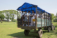 India – West Bengal: School children at Mogulkata Tea Estate, in the Dooars region. Pupils are transported in trailers used to carry tea leaves rather than in proper buses and the level of education is generally low. Although companies are supposed to provide schooling for the workers' children, schools are often managed by the government, under special schemes reserved for low-income communities.