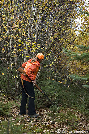Hunter searching for ruffed grouse