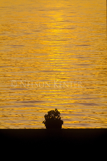 A flower pot on the shore is silhouetted against golden colors of sunset on Flathead Lake in Montana
