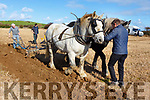 Martin Deane leading the horses and Moss Trant working  the plough at the Abbeydorney Ploughing on Sunday.