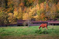 Horse grazing at Steel Creek Campground on the Buffalo National River in Arkansas.