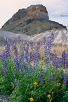 Big Bend bluebonnet and Cerro Castellan<br />