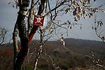Signal minefield in Mozambique years after the civil war that suffered this country.Señal de zona minada en Mozambique años despues de la guerra civil que sufrio este pais.