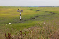 Osprey; Pandion halieatus; nest on platform in salt marsh;  NJ, Stone Harbor