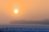 Fog and hoarfrost on the prairie<br /> DUgald<br /> Manitoba<br /> Canada