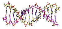 Deoxyribonucleic acid (DNA) is a nucleic acid that contains the genetic instructions used in the development and functioning of all known living organisms.  The structure of part of a DNA double helix.