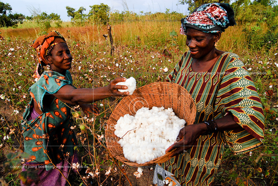 MALI , Bougouni, Fair trade und Biobaumwolle Projekt , Frauen bei Waumwollernte | .MALI , Bougouni , women harvest fair trade organic cotton
