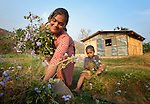 With help from her 5-year old son Safal, Maya Thapalyia picks plants for her livestock to eat in front of a transitional house built for her family in Majhitar, Nepal, by Dan Church Aid, a member of the ACT Alliance. Her family's home collapsed completely in an April 2015 earthquake that ravaged Nepal.