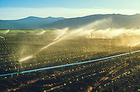 Early morning farm field irrigation sprinklers in Salinas Valley, Californai