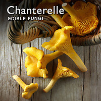 Food Pictures of Chanterelle or Girolle Mushrooms Fresh & Cooked.  Food Photos, Images.