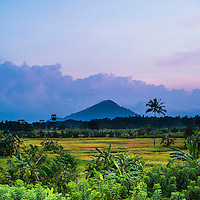 Sri Lanka landscape at sunrise, paddy fields near Dambulla, Central Province, Sri Lanka, Asia. This is a panoramic photo of a paddy field Sri Lanka landscape near Dambulla, Central Province, Sri Lanka, Asia. There are endless opportunities for landscape photography in Sri Lanka, and the paddy fields around Dambulla are easily one of the highlights.