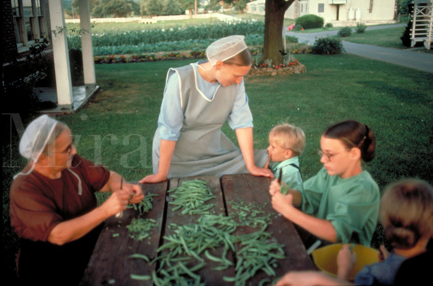 Amish grandmother, mother and children prepare string beans at an outdoor picnic table. Amish family. Lancaster Pennsylvania United States Farmstead.