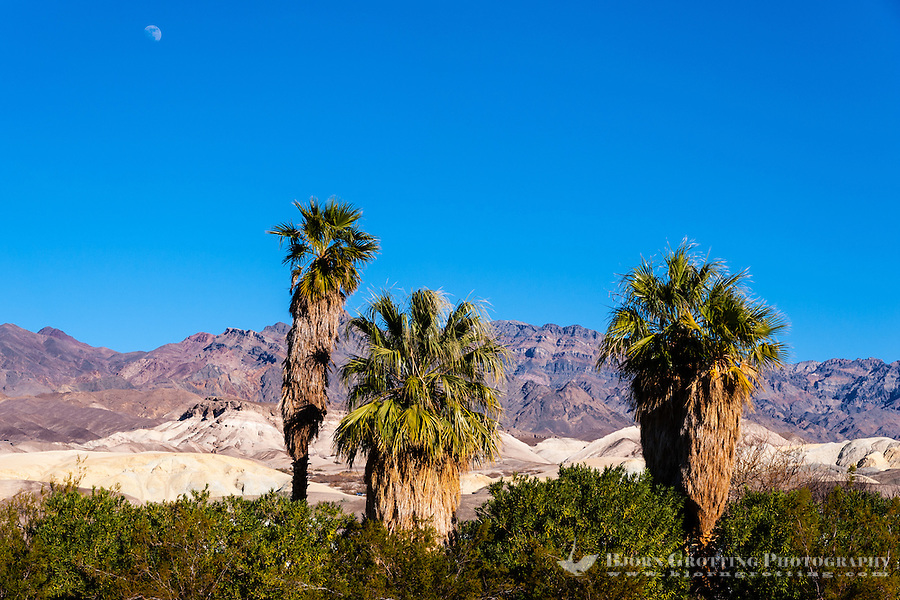 United States, California, Death Valley. Furnace Creek is an oasis in the desert.