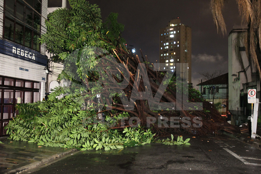 SÃO PAULO, SP, 15/01/2012, QUEDA DE ÁRVORE.<br /> <br /> Uma árvore de grande porte caiu na noite de ontem (15) na Rua Lubavitch,10 no Bom Retiro.<br />  Segundo informações de moradores, houve uma poda parcial da árvore, porem somente de um dos lados da copa, eles acreditam que isso tenha desestabilizado a árvore, que caiu para  o lado mais pesado.<br /> <br />  Luiz Guarnieri/ News Free.