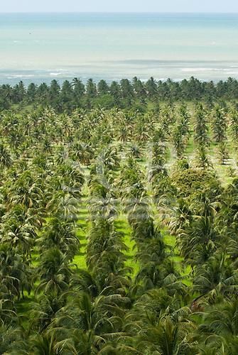 Alagoas State, Brazil. Mirante da Praia do Gunga. Commercial coconut palm plantations by the sea, high view.