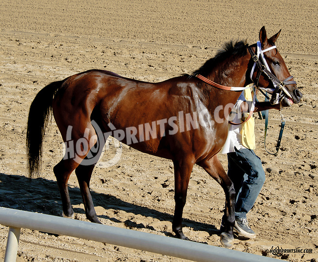 Special P before The Delaware Park Arabian Juvenile Championship (grade 3) at Delaware Park on 9/27/14