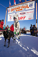 Sunday, March 4, 2012  Gerald Sousa's dogs leap in anticipation at the start line during the restart of Iditarod 2012 in Willow, Alaska.