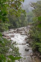 Rio Hollin Chico, Ecuador, Prov. Napo, Narupa Reserve