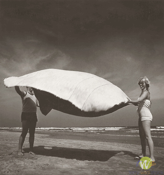 Vintage black and white print scan. Couple spreading beach blanket. Brigantine, NJ. 79-250 #3 file.