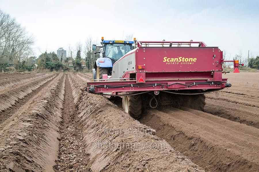 Destoning for potatoes - Norfolk, February