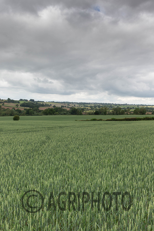 20.6.2020 Rutland landscape <br /> ©Tim Scrivener Photographer 07850 303986<br />      ....Covering Agriculture In The UK.