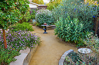 Crushed rock decomposed granite path between drought tolerant garden beds with Asclepias speciosa (Showy Milkweed), lantana, Arbutus in backyard California garden.
